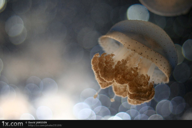 Dreaming Jellyfish